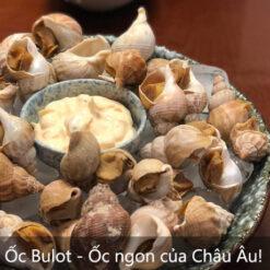 Ốc Bulot Pháp